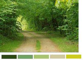 Цветовая схема гаммы красок леса