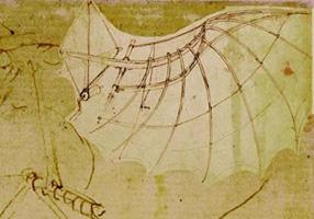 Анатомия стрекозы.