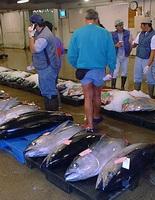 Рыбный аукцион в Гонолулу (Гавайи)